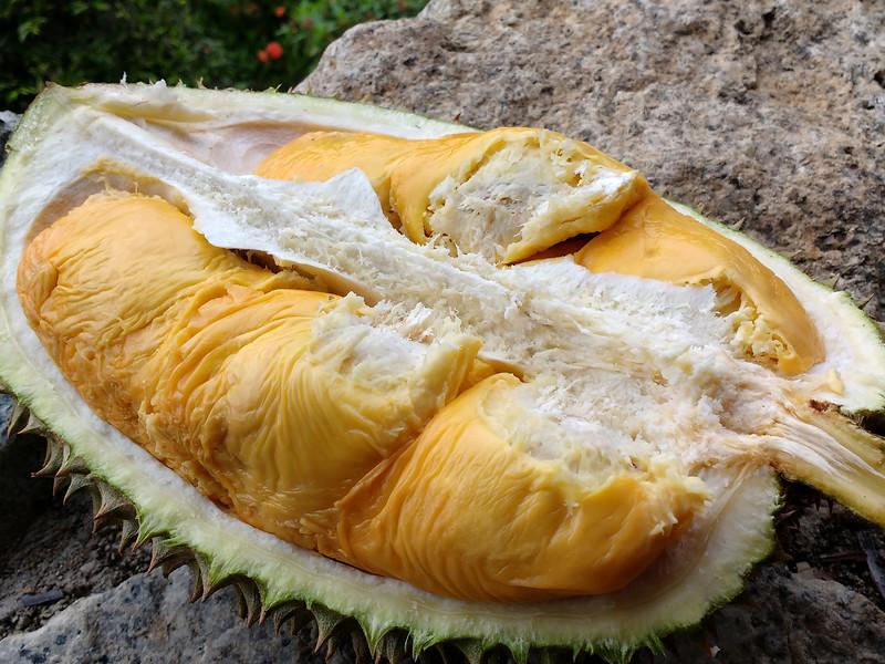2016 Penang Durian