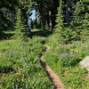 Our 'front yard' flower garden - walking into our campsite in Cairn Basin