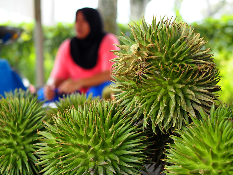 Durian hutan durian stall