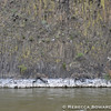 Crooked River basalt walls