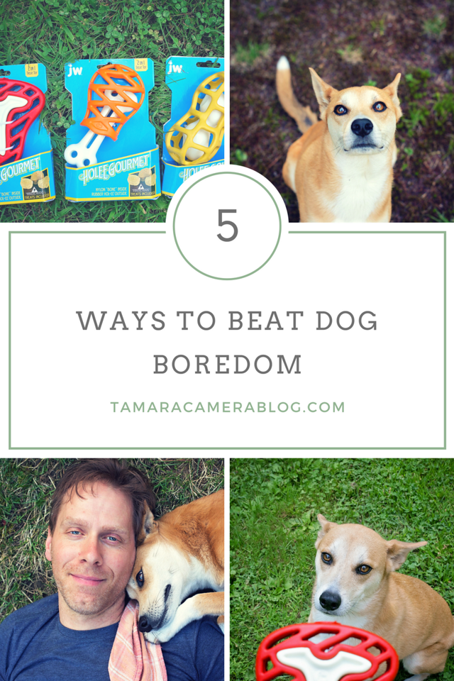 Did you know that dogs can get bored? They sure can! Here are 5 ways to beat boredom in your dog, especially with interactive toys. #jwpet #ad #holeegourmet