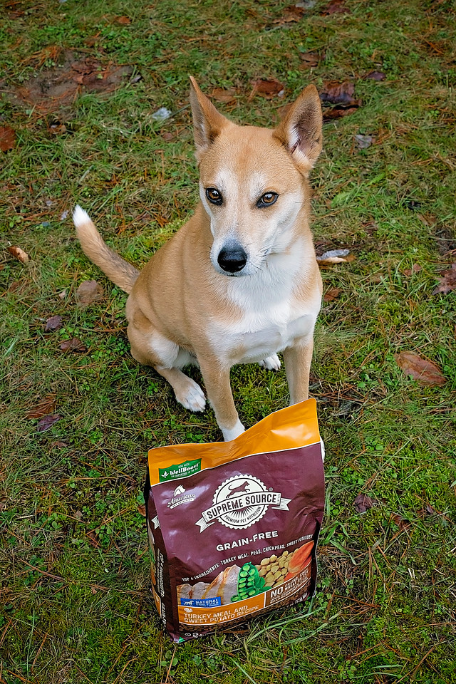 Time for a #SuperFoodSwitch! We're taking the 10-day detox with our dog, Athena, and talking about wellness goals for her future this spring. Check it out here! #ad #IC