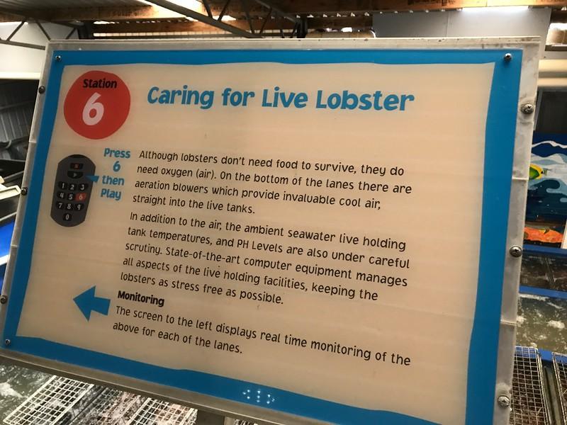Lobster Shack Cervantes Factory Tour