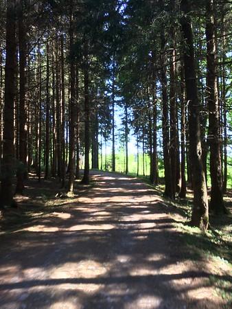 Forest Fussen