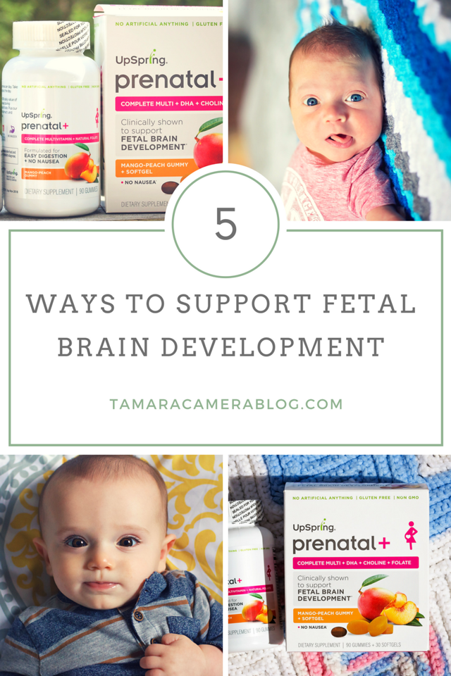 Pregnant or trying to conceive? Here are 5 ways to support brain development and take care of both YOU & your baby as best you can! #spon #UpSpringBaby #TTC