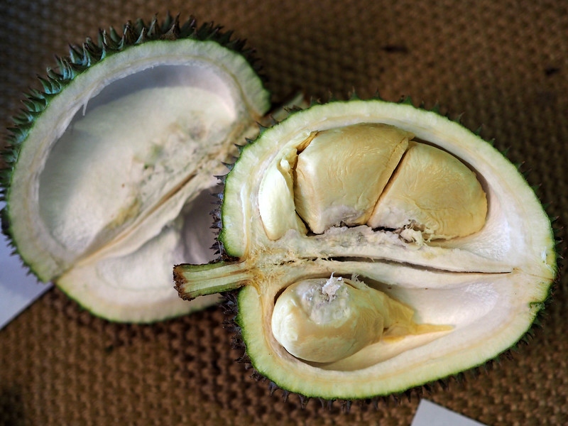 durio lowianus