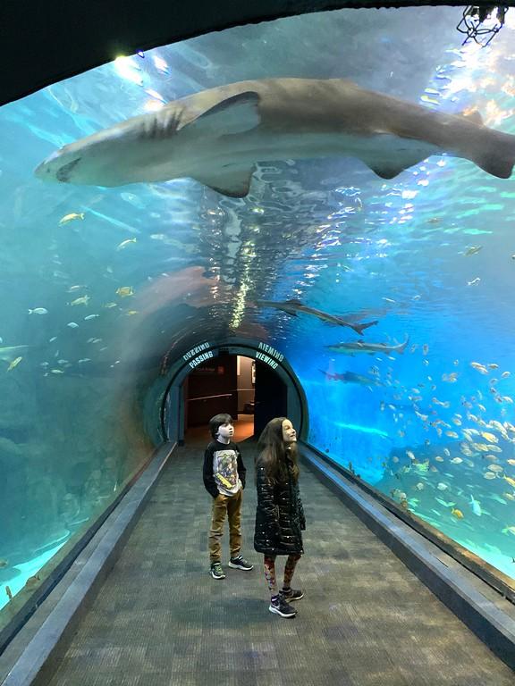 adventure aquarium sharks