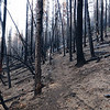 This area was decimated by the fire.