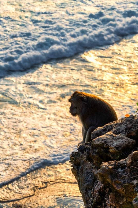 Monkey chillin' at Uluwatu