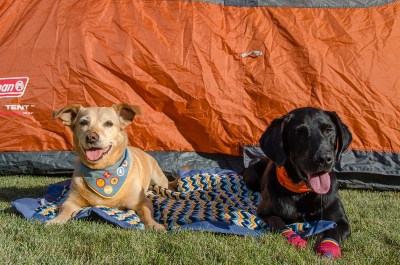 Tips for Camping with Dogs + a dog camping packing list!