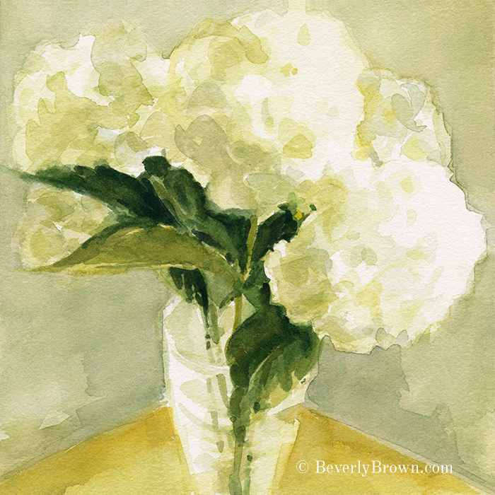 White Hydrangea prints for sale by watercolor artist Beverly Brown - www.beverlybrown.com