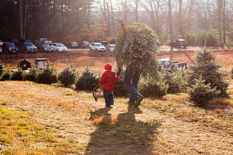 An authentic Christmas is about the tradition, scent and beauty of a natural tree. Not plastic stuff. It's Christmas, #KeepitReal. Holiday adventure time!
