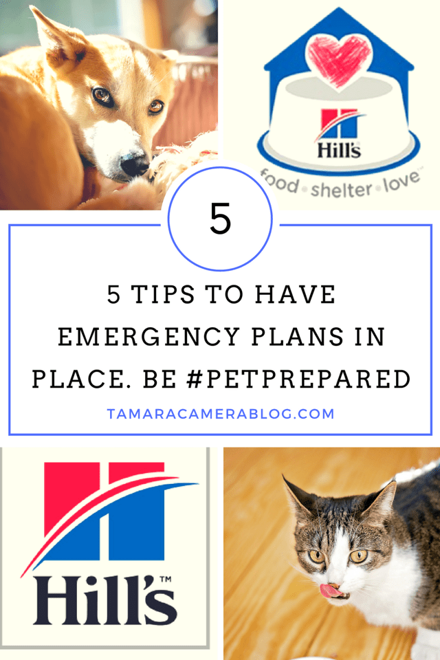 Are You #PetPrepared? Here are 5 Tips to Have Emergency Plans in Place. Hill's is joining the nation-wide network of shelter partners to help encourage us to participate in National Animal Disaster Preparedness Day. #BlogPaws #ad