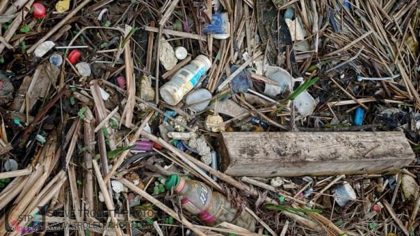 Déchets de plastique le long des rives du parc nature de l'Île de la Visitation - Montréal