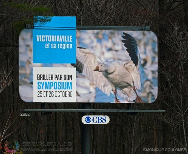 Billboard — Symposium des oies de neiges au réservoir Beaudet de Victoriaville