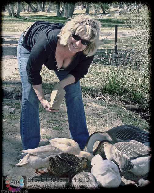 Feeding proper feed to domesticated ducks and geese...