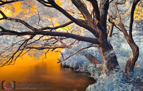 Ile de la Visitation Nature Park - Infrared