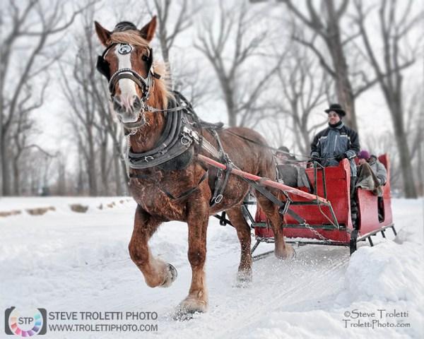 Steve Troletti Photo - Tempus Aura: Winter Festivals / Festivals d'hiver &emdash; Horse-drawn sleighride / Promenade en traîneau à cheval (Fête des neiges de Montréal)