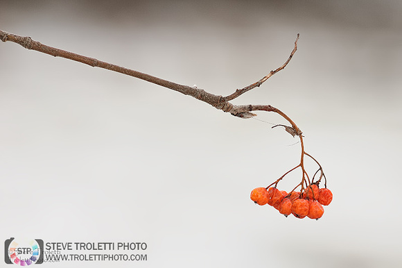 Steve Troletti Photography: PICTURE OF THE DAY / PHOTO DU JOUR &emdash; Winter Fruit for Thought / Fruits de l'hiver pour une pensée