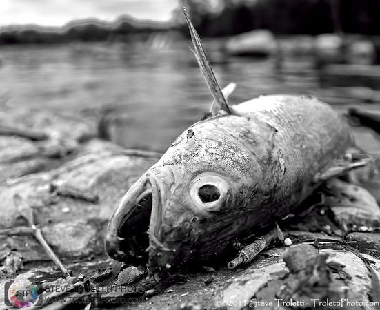 Steve Troletti Photography: NATURE & LANDSCAPES &emdash; Death Along the River