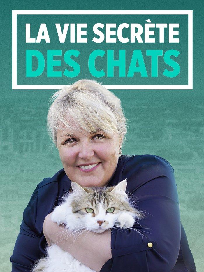 La vie secrète des chats Série documentaire 2019 - Télé Star