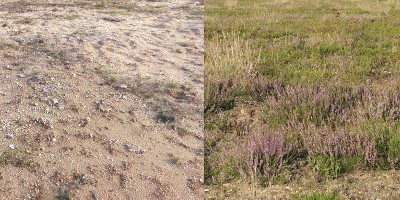 DonorSoil Microbes Drive Ecosystem Restoration  The