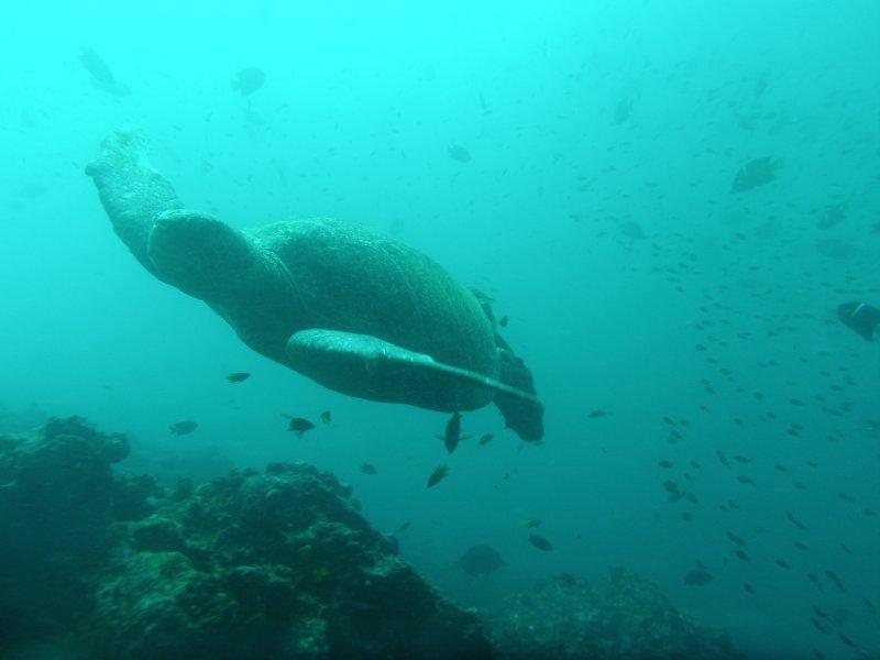 galapagos islands video