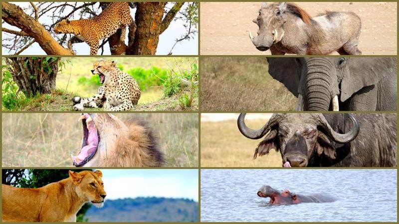 Animals at Maasai Mara