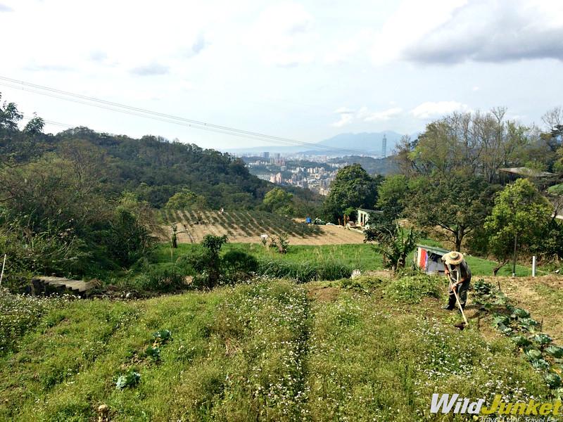 things to do in taipei taiwan - mao kong tea plantations