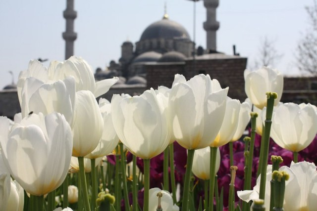 travel without quitting your job - Istanbul is a great place to explore on a work trip