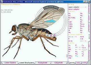 picture of a fly with one segment of its wing highlighted and the name of that segment highlighted in the list beside it