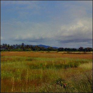 Goan landscape