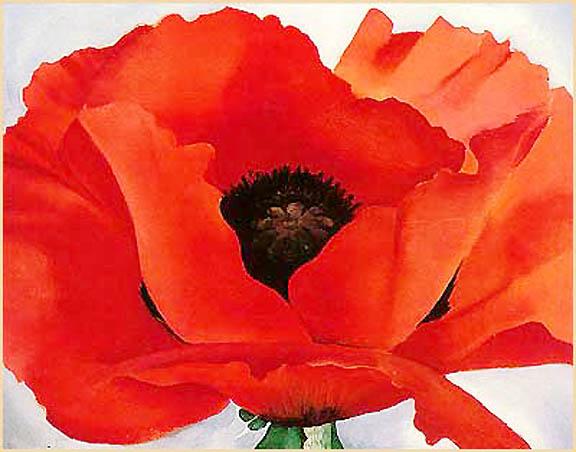 Image result for improved poppy