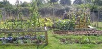 Allotment September 2006