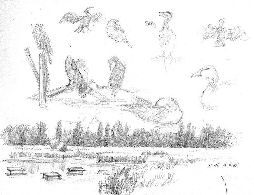 Sketching Nature