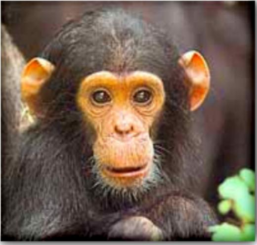 Monkey Prose January 2007