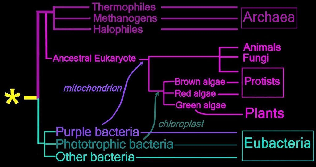 eubacteria and archaebacteria venn diagram wiring 12 volt relay archaea