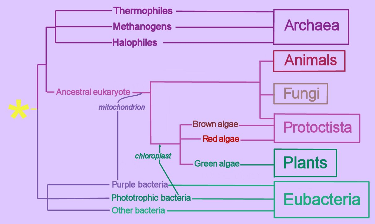 hight resolution of endosymbiotic transfer events