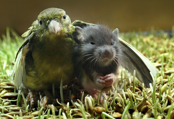 Image result for animal friendship