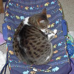Bouncy Chair Weight Limit Wheelchair Kevin Hart Samurai Knitter: May 2006