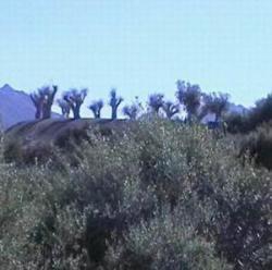 la collina sospetta