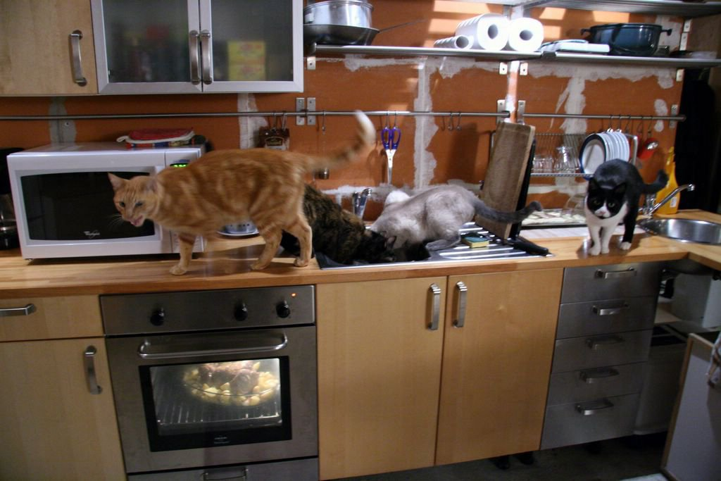 cats in the kitchen where to buy curtains becks posh a french photograph picture of