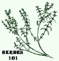 18thC Cuisine Herbes 101