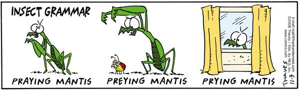 bug safari praying mantis comic