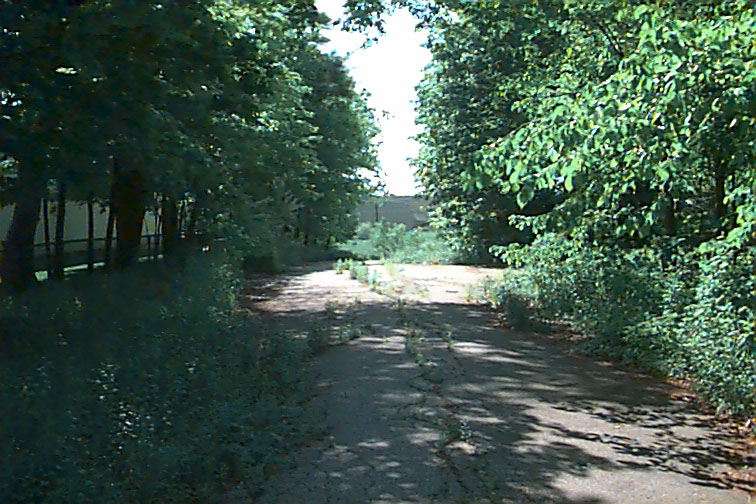City In The Trees: June 2005
