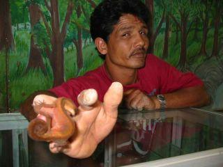 Ένας τύπος κρατάει στο χέρι του μια σαύρα που ονομάζεται γκέκο και την δείχνει επιδεικτικά στην κάμερα