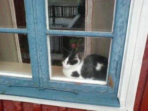 Katt i fönstret