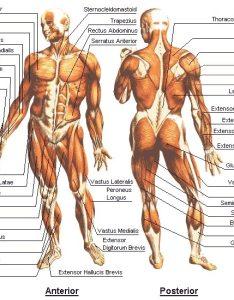 Fitness resolutions anatomy chart also rawketscience january rh rawketsciencespot