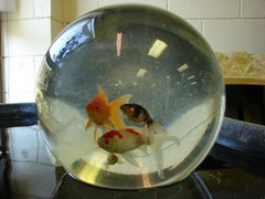 Image result for fishbowl upside down