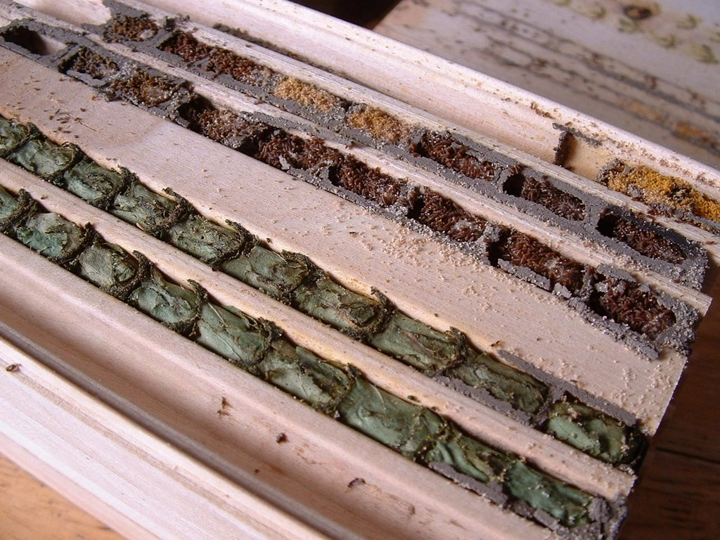 Mason And Leaf Cutter Bee Cocoons